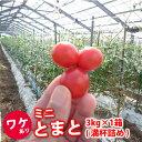 【送料無料】 【訳あり】 ミニトマト/3kg 熊本産 ミネラルトマト フルーツ お取り寄せ