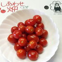 【送料無料】 【訳あり】 ミニトマト/3kg 熊本産 ミネラルトマト フルーツ お取り寄せ 夏野菜