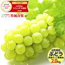 【予約】山形県産 ブドウ ナイアガラ 2kg(ご家庭用/3房...