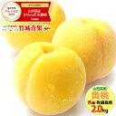 ギフト 山形県産 黄桃 2kg(秀品/有袋栽培/5玉〜8玉入り/キャップ・トレー仕様)