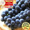 山形県産 ブドウ キャンベル 2kg(ご家庭用/3房〜10房)
