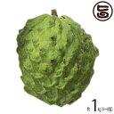 (期間限定)アテモヤ (アフリカン プライド) 約1kg 小粒 (4?6個) 中村果樹園