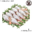 かれい一夜干 850g 約8?12枚 条件付き送料無料 島根県 人気 魚介類 一夜干し