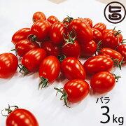 GINZA FARM 高糖度プレミアムトマト 3kg バラ納品 条件付き送料無料 新鮮 高級 甘いとまと 産地直送