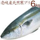 【K】壱岐産天然寒ぶり【6kg】網漁の氷見の寒ブリに勝るとも...