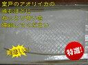 アオリイカ刺身用(冷凍)