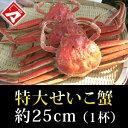 ≪11月6日解禁・早期ご予約≫【特別価格】特大せいこ蟹(約25cm)1杯