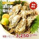 ★松島湾産 活牡蠣殻付き 15ヶセット(加熱調理用)送料無料!★