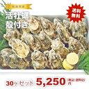 ★松島湾産 活牡蠣殻付き 30ヶセット(加熱調理用)送料無料!★