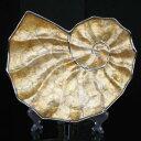インテリアオーナメント/室内置物 【巻貝型】 長さ36cm×幅29.5cm×高さ4cm スタンド付 陶器製 『貝殻 シェルディッシュ』