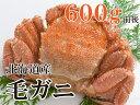 ボリューム満点!1尾約600gのビックサイズ毛ガニ!(北海道産)【同一商品を3尾以上のご購入で送料無料】【毛がに・毛蟹・かに・カニ・蟹】