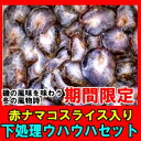 【SALE】送料無料赤ナマコ入り下処理鮮魚セット