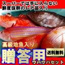 【贈答用】ウハウハ鮮魚セット【送料無料】【楽ギフ_のし】
