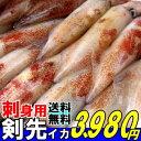 7月が旬の魚貝イカ類と言えば剣先イカお中元 送料無料ケンサキイカ刺身約700g4-5人前