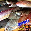 【送料無料】魚かつのウハウハ鮮魚セット旬...