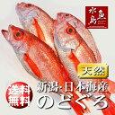 【送料無料】のどぐろ 新潟・日本海産 ノドグロ 300g以上...