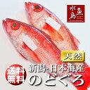 【送料無料】のどぐろ 新潟・日本海産 ノドグロ 700g以上...