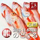 【送料無料】のどぐろ 新潟・日本海産 ノドグロ 250g以上・5尾(生冷凍)
