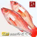 【送料無料】のどぐろ 新潟・日本海産 ノドグロ 600g以上・2尾(生冷凍)
