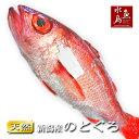 【送料無料】のどぐろ 新潟・日本海産 ノドグロ 900g以上・1尾(生冷凍)