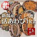 【送料無料】新潟県産 天然 活アワビ・あわび 1kg 訳あり