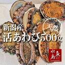 新潟県産 天然 活アワビ・あわび 500g 訳あり