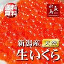 【送料無料】新潟産 生いくら 季節限定「とろりやわらか 生イクラ」 1kg