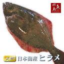 【送料無料】天然ヒラメ 平目 日本海産 4.0~4.4キロ物