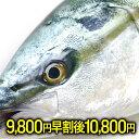 【早割9800円終了後10800円】ぶり ブリ 鰤 寒ブリ ...