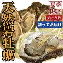 【日本海産】天然岩牡蠣《割ってお届け》10個セット