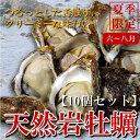 今が旬!日本海の天然岩牡蠣(殻を割ってお届け) 【送料無料】天然岩牡蠣(割ってお届け) 10個セット 【RCP】