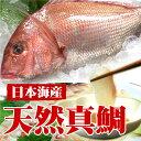 お祝に!【日本海産】天然真鯛一尾(姿のまま・刺身等お選び下さい)