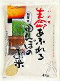 26年度産 胚芽米 ひとめぼれ 4kg【決算セールお買い得価格!】