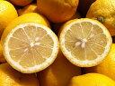 【送料無料】わけあり レモン 3kg 福岡県産 ワックス農薬防腐剤不使用