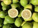 【送料無料】ちょっとわけありレモン3kg 福岡県産 ワックス農薬防腐剤不使用