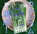 小松菜【九州産】