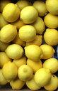 レモン 30玉 usa