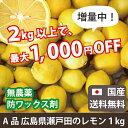 A品広島県瀬戸田のレモン(無農薬)(1kg)|送料無料|楽天クーポン割引対象|佐川急便配送|