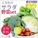 こだわりサラダ野菜セット【送料無料】