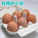 有精卵6個 小笠原さんの平飼自然養鶏の卵6個