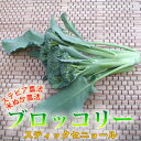 茎まで美味しいブロッコリースティックセニョール1束150gビタミン豊富で体も元気!!茎も葉っぱも栄養がギッシリ!歯ごたえ楽しむ新ブロッコリースティックセニョール150g