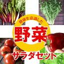 【1000円セット】新鮮野菜サラダセット【西洋野菜茎ブロッコリー・アクートキャベツ】