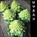 イタリアの西洋野菜♪花束のような「ロマネスコ」1株 コク深で甘みあるイチオシ野菜!