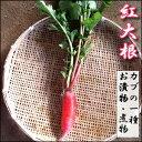 【12月上旬頃収穫予定】見た目も美しい紅大根1本