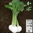 【11月中頃収穫予定】漬物、スープ、サラダにも♪滑らかで甘みある白カブ1束(3�6玉)