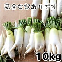 【予約】【10月中頃から年内迄収穫】ステビア・米ぬか農法の瑞々しい訳あり大根10kg【千葉県産】