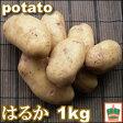 【じゃがいも】【生でも食べられる!】ステビア農産物じゃがいも『はるか』2S〜2Lサイズ混合1kg