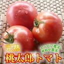 リコピンパワーはいつでも欲しい!桃太郎トマト300g(2?3玉)