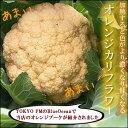 【11末以降にお届け】料理しても壊れないビタミンC!オレンジカリフラワー『オレンジブーケ』1株