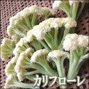 【11末より発送予定】サックリ歯ごたえでお料理に重宝茎カリフラワーのカリフローレ1袋